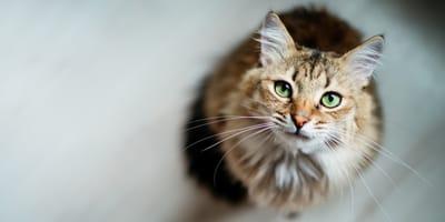 Rollige Katze: Wie lange und was tun?