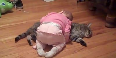 Ve que su bebé se tira sobre el gato: nunca imaginó lo que iba a presenciar (Vídeo)