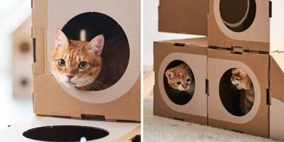 Pareja de arquitectos crea una ciudad con cajas de cartón: así reaccionan los gatos (Vídeo)