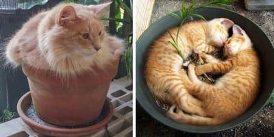 Katzen in Pflanzenkübeln