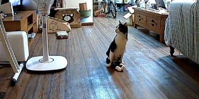 gato paralitico camara de seguridad