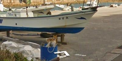 Perro en Google View