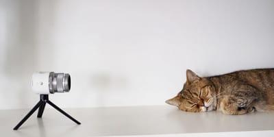 app camara de vigilancia gato