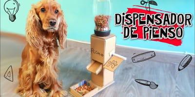 como hacer un dispensador de comida para perros