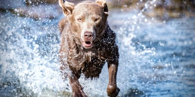 los perros huelen el peligro
