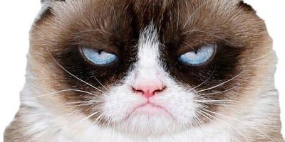 grumpy cat enfadado