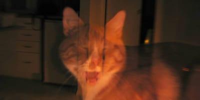 gato viendo un espiritu
