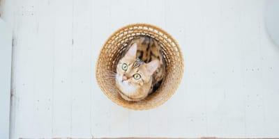 Tener gato en un departamento pequeño: ¿buena o mala idea?