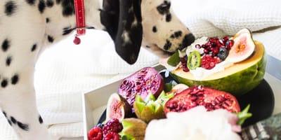 """10 """"superalimentos"""" que deberías incluir en la dieta de tu perro"""