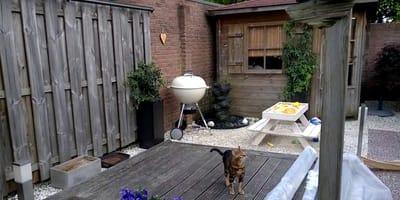 Mi gato se escapa de casa: encontramos una solución tan simple como efectiva