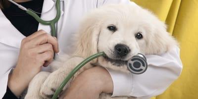 Conversaciones en el veterinario sobre tu perro