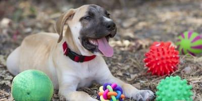 Cómo estimular la inteligencia de tu perro: 3 juguetes que posiblemente no conocías