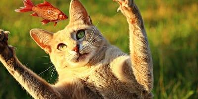 gato come pescado