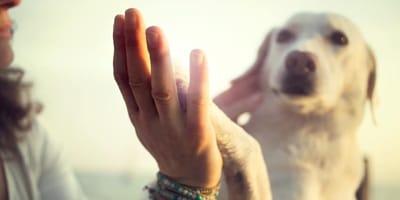 adiestar a un perro