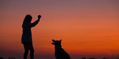 Aprendizaje por condicionamiento clásico: ¿cómo aplicarlo en tu perro?