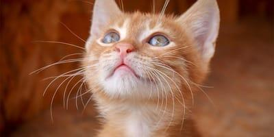 Le malattie più frequenti nei gatti domestici