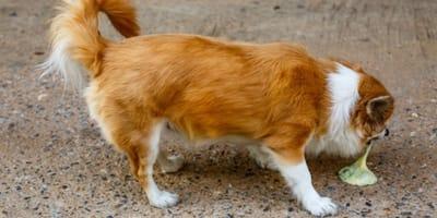 Gastritis en perros sintomas