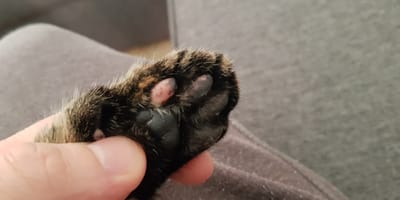 uñas de gato foto