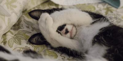 gato timido