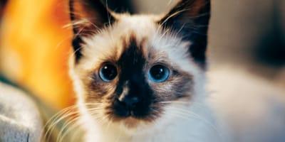 gatito enferme síntomas