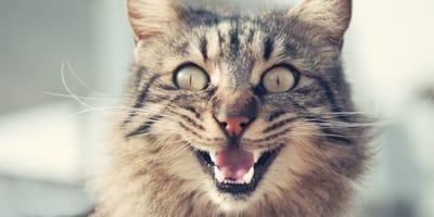Mi gato se pone agresivo de repente y me ataca
