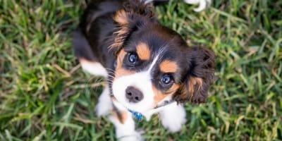Cómo enseñarle a un cachorro a ir al baño: las claves del veterinario