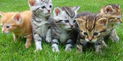 enfermedades gatos recien nacido