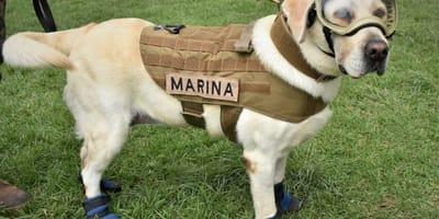 adiestrar perros de busqueda y rescate
