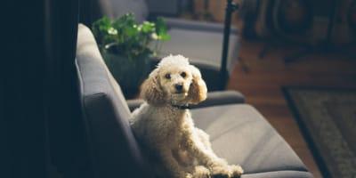 Cómo enseñarle a mi perro a quedarse solo