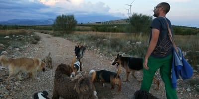 Perros portando varios accesorios para pasear