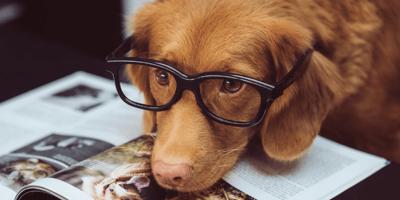 cane-marrone-con-occhiali