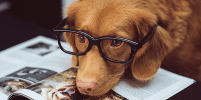 Brown dog wearing glasses