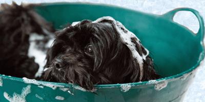 Black dog having a bath