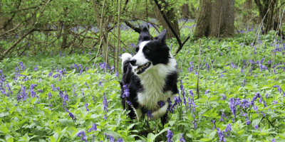 Try out our 7 best dog friendly holidays