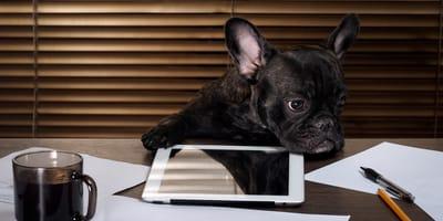 hund sitzt am schreibtisch mit tablet und kaffee