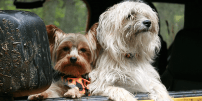 Everything you need to know about dog travel sickness
