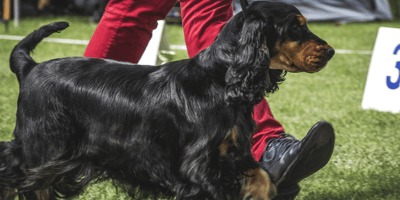 Cane a concorso canino