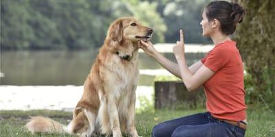 Psi behawiorysta: kim jest behawiorysta zwierząt i czy jest potrzebny Twojemu psu?