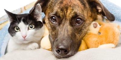 Chory pies i kot