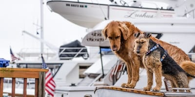 cane davanti barca