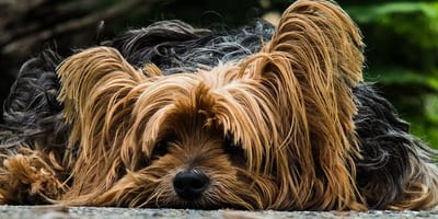 Cani che non perdono il pelo e cani che ne perdono troppo: cause e rimedi