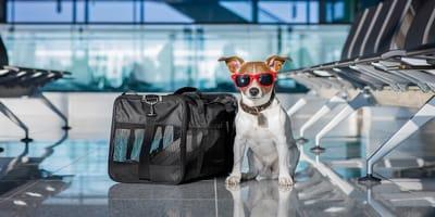 In aereo con il cane: a bordo o in stiva?