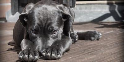 Qual è la corretta alimentazione per cani sterilizzati?