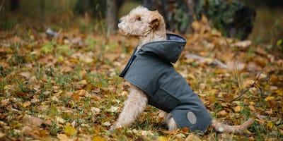 cane con cappotto