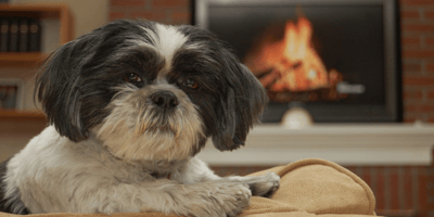 Black and white dog sat by the fire