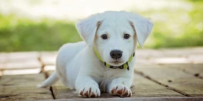 A cosa fare attenzione durante l'acquisto di un cucciolo?