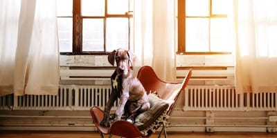 cane seduto su sedia di psicologo