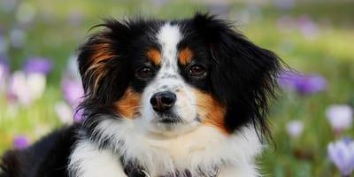 Sai dove comprare un cane e a cosa fare attenzione?