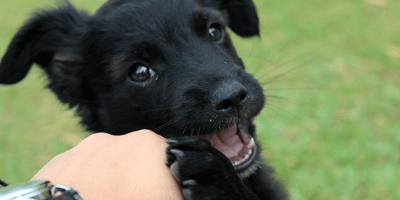 cane innamorato del padrone