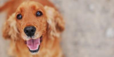 cane sorridente cerca di comunicare